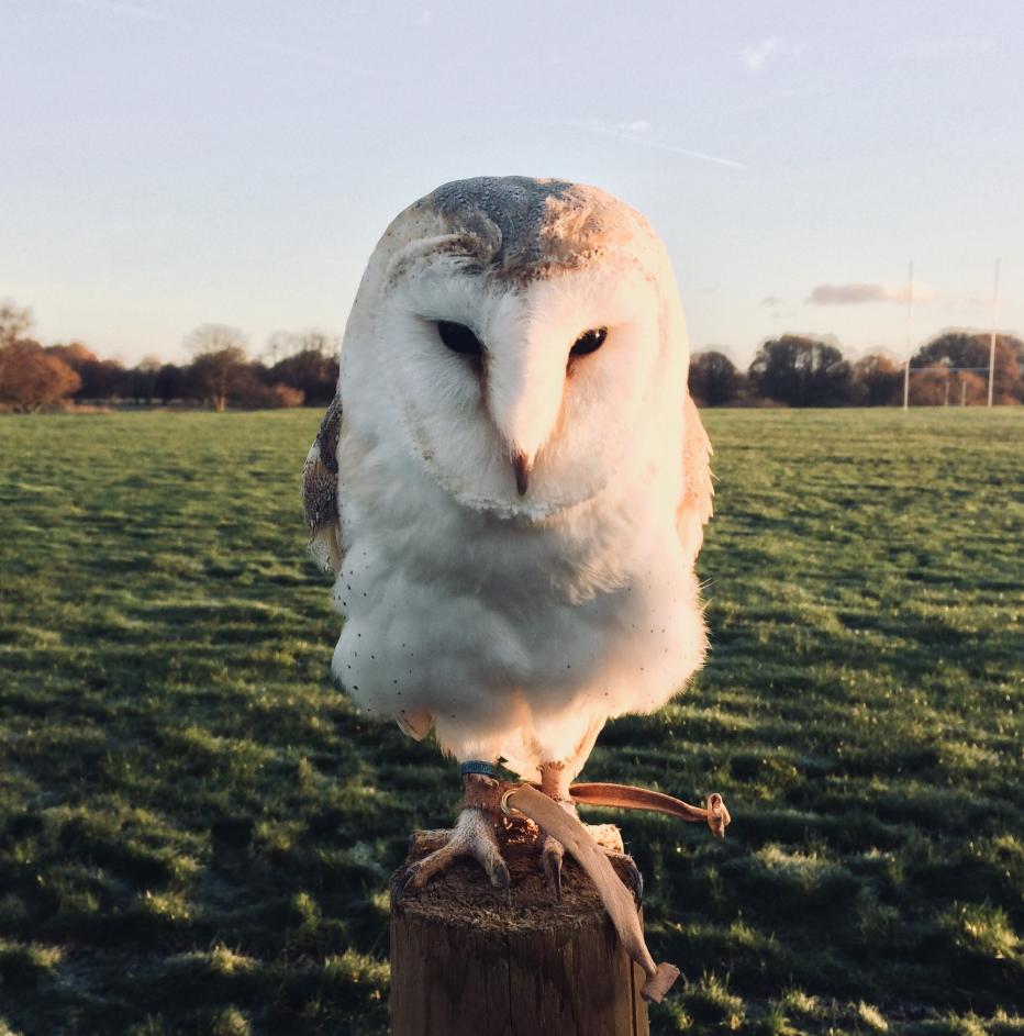 Image-owl