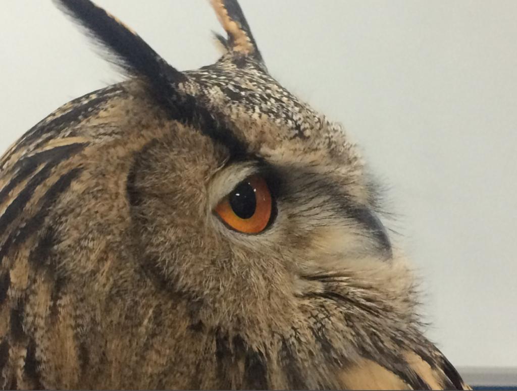 Image-owl2